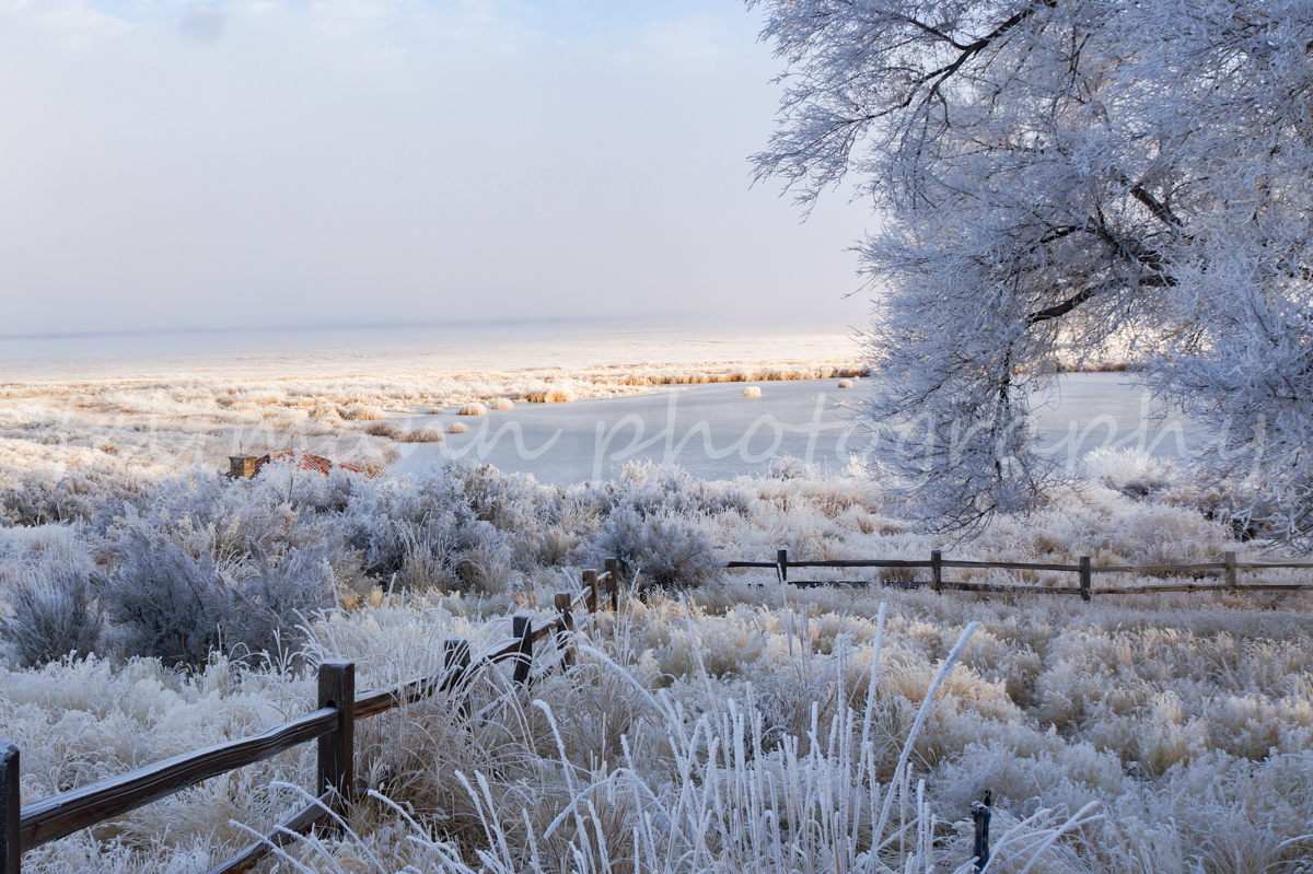 Winter at Marshall Pond, Malheur Headquarters