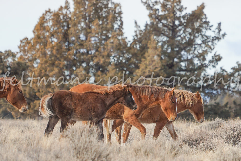 Palomino Butte Youngsters in Winter Woolies