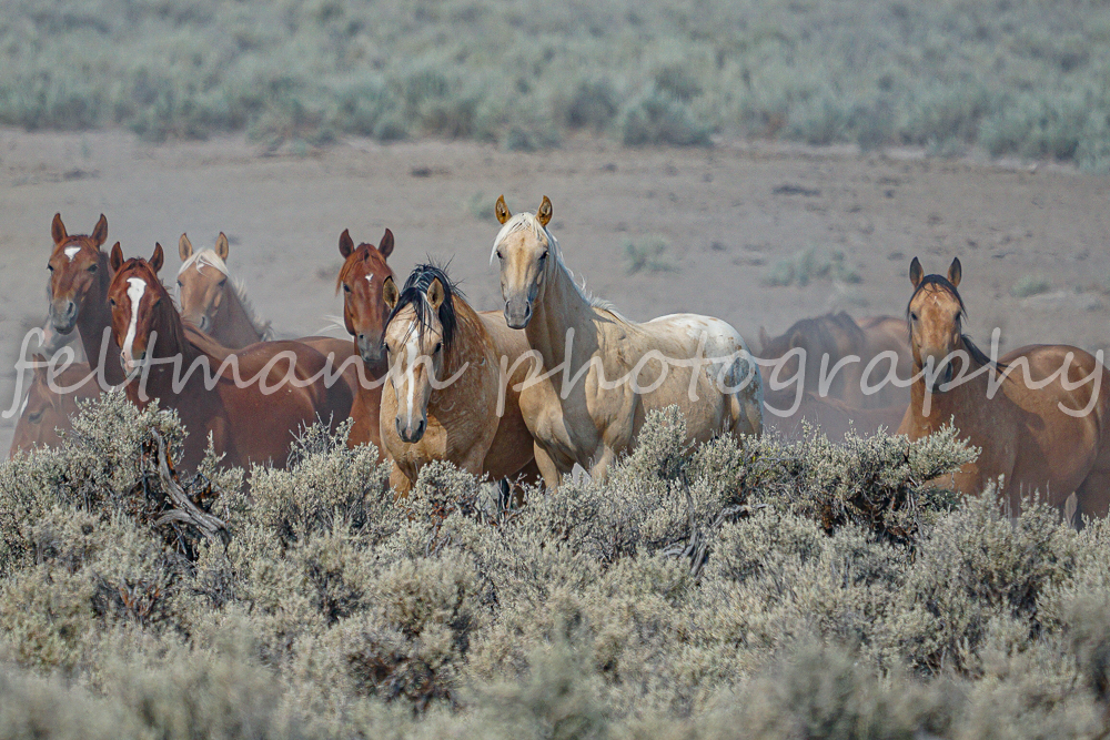 Palomino Butte Curious Mustangs #2